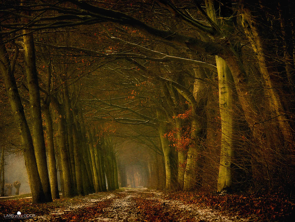 1176 Лесные пейзажи Ларса Ван де Гур