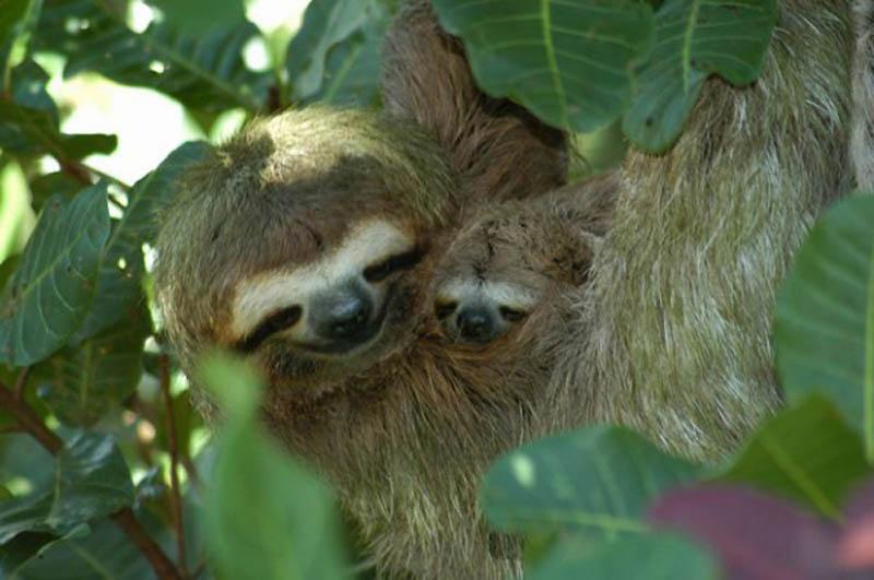 1179 Детские двойники взрослых животных