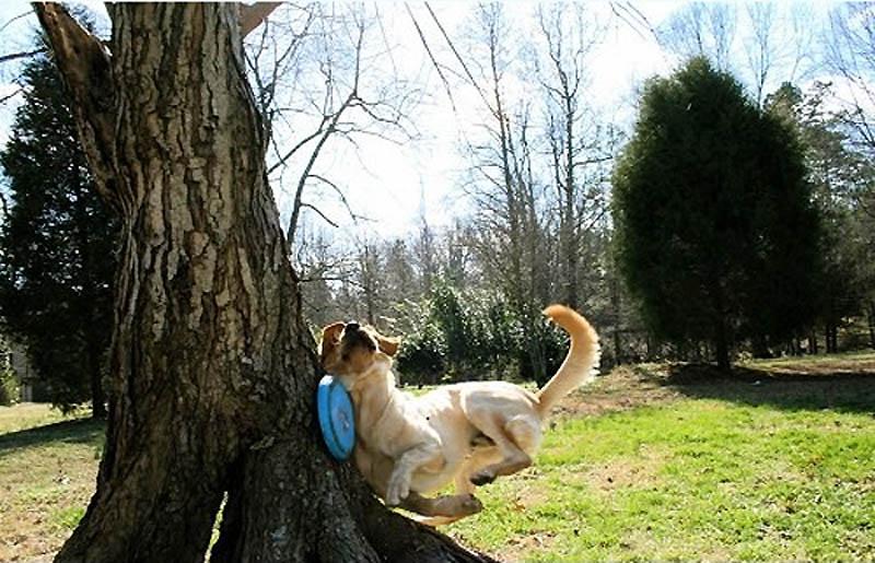 1203 Почему кошки лучше собак