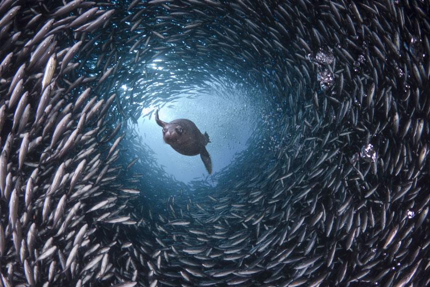 1206 Жизнь в океане   подводные фотографии Дэвида Флитэма