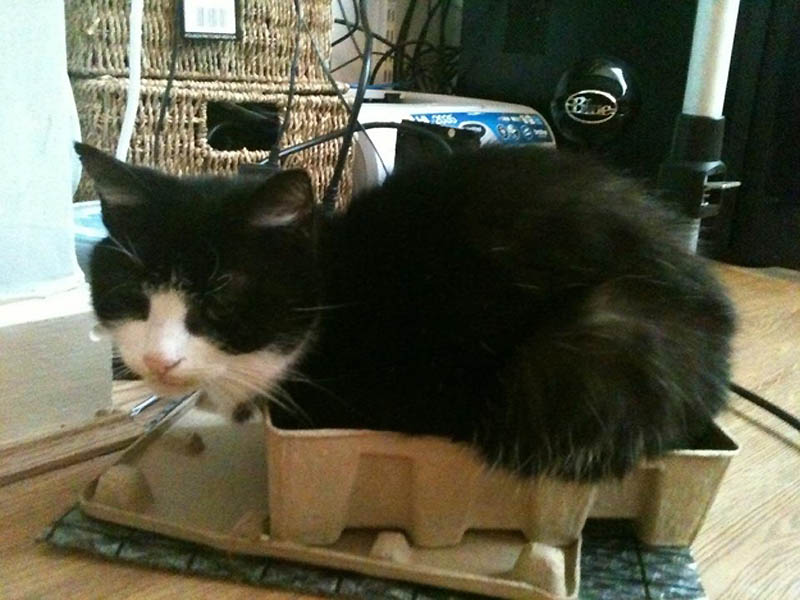 1213 Идеальные места для отдыха   версия для котов