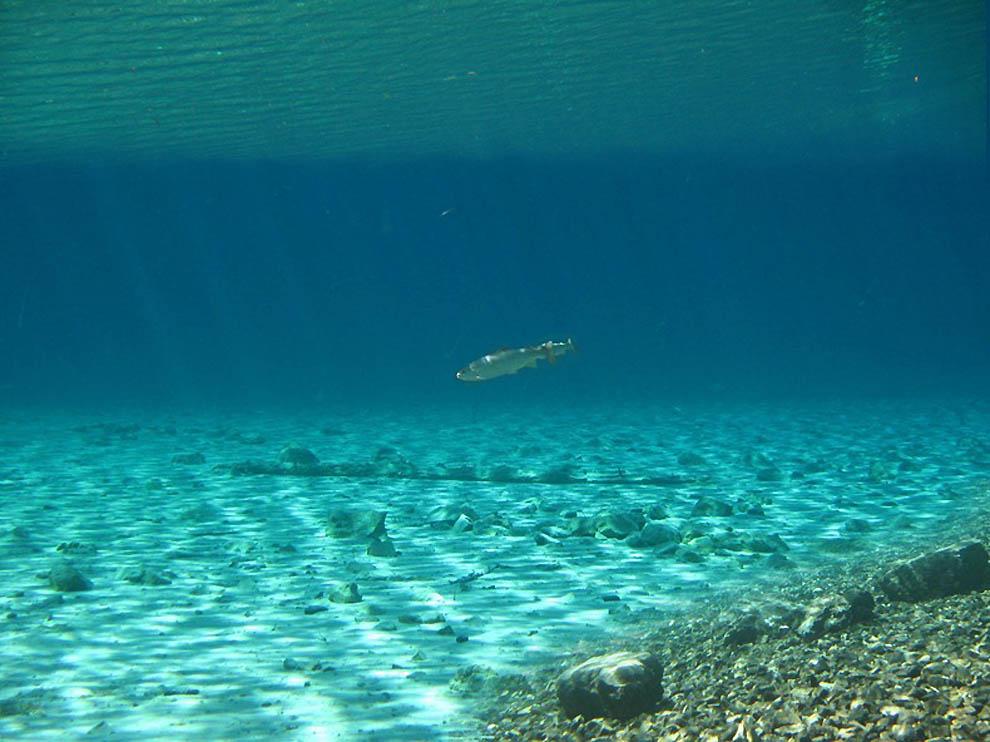 Подводный парк «Зеленое озеро»