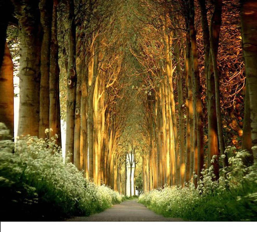 1246 Лесные пейзажи Ларса Ван де Гур