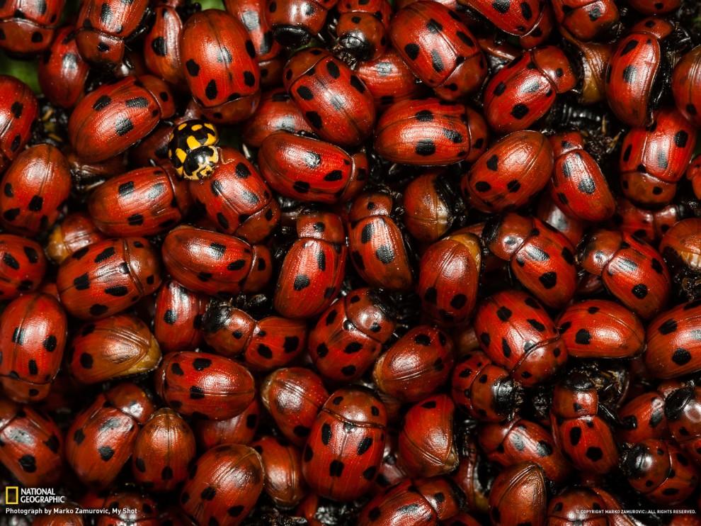 127 990x742 Обои для рабочего стола от National Geographic за июль 2012