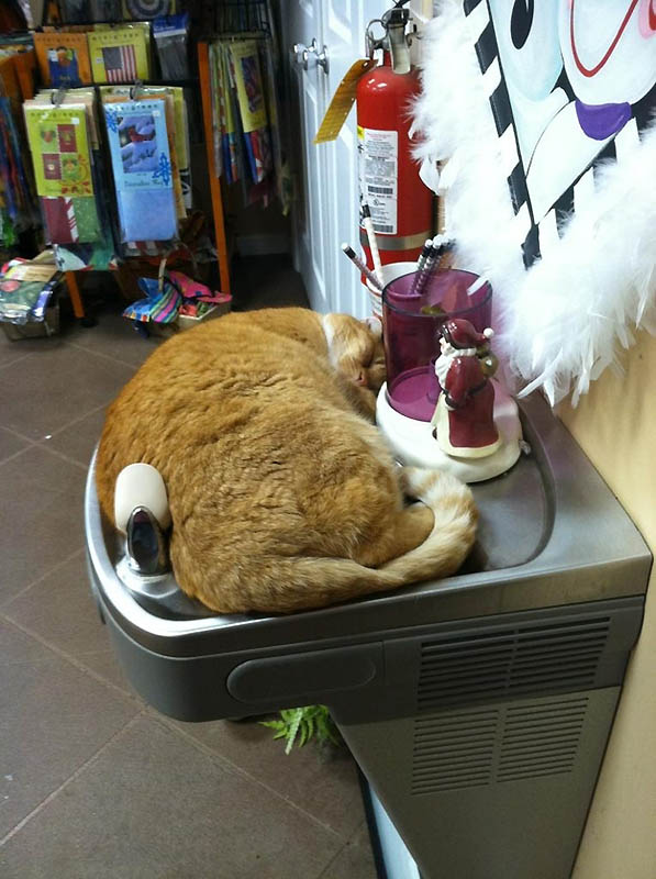 1313 Идеальные места для отдыха   версия для котов