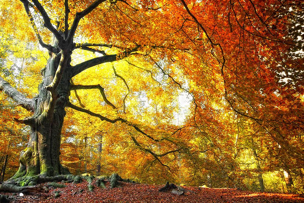 1343 Лесные пейзажи Ларса Ван де Гур