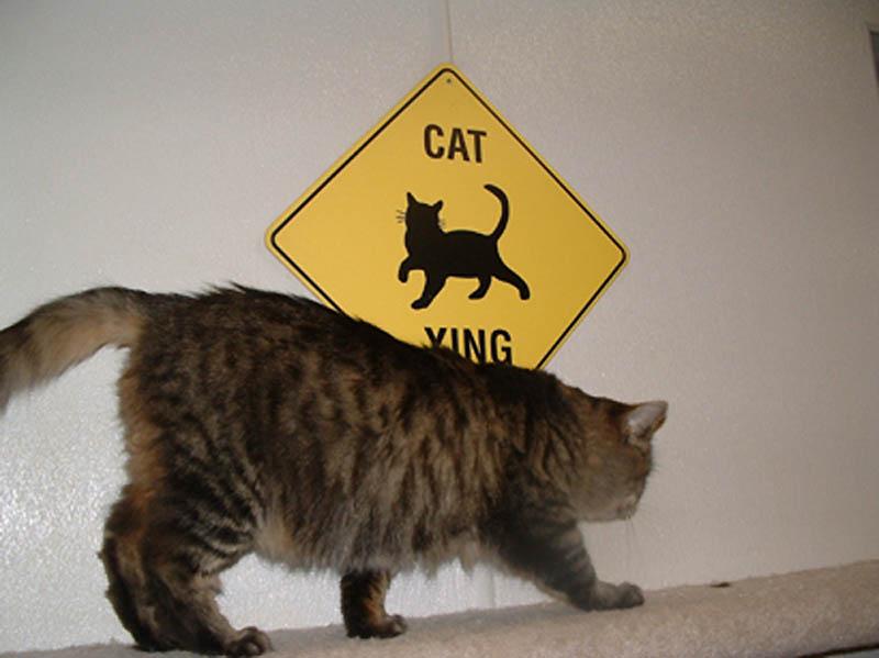 1356 Почему кошки лучше собак
