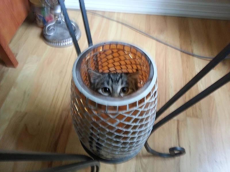 1410 Идеальные места для отдыха   версия для котов