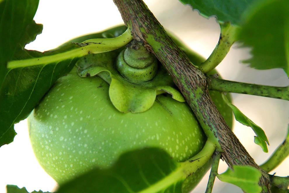1419 Экзотические фрукты