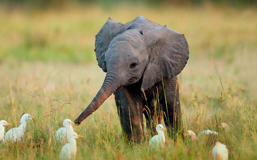 Слоник топает на речку.