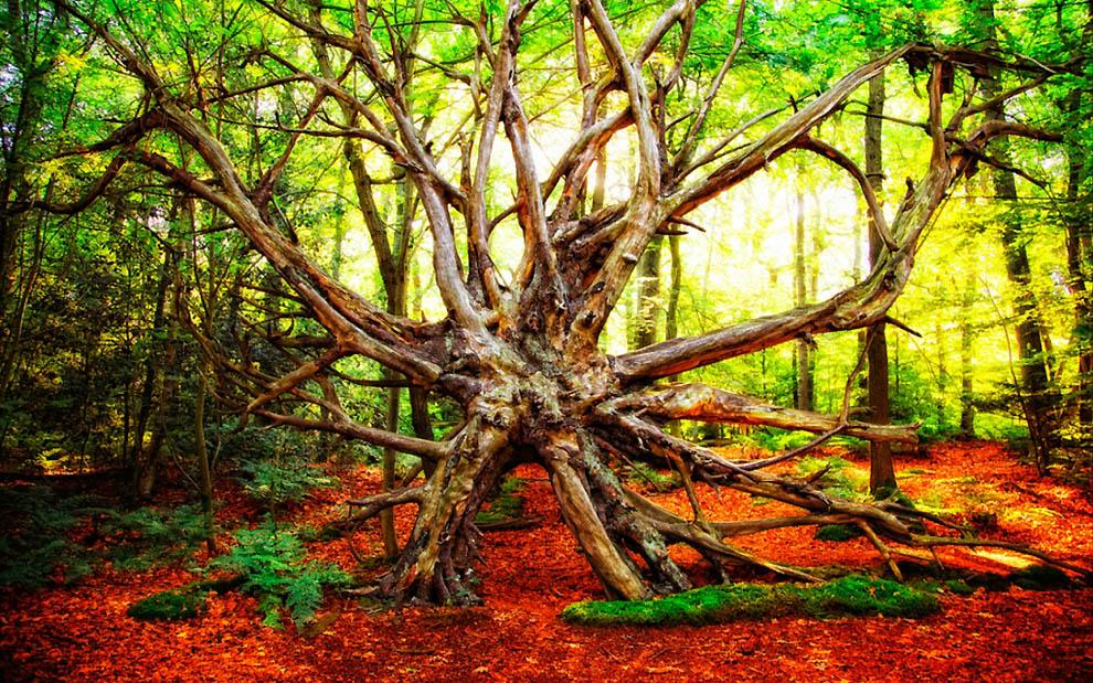 1440 Лесные пейзажи Ларса Ван де Гур
