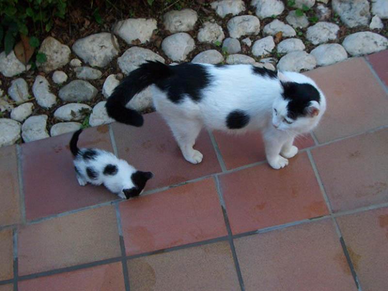 1442 Детские двойники взрослых животных