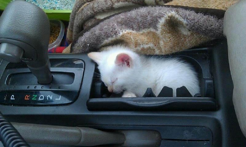 150 Идеальные места для отдыха   версия для котов