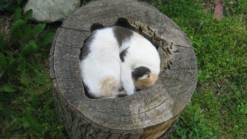 159 Идеальные места для отдыха   версия для котов