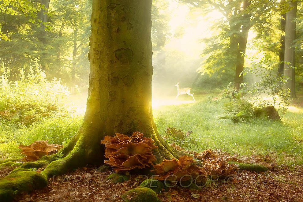 1636 Лесные пейзажи Ларса Ван де Гур