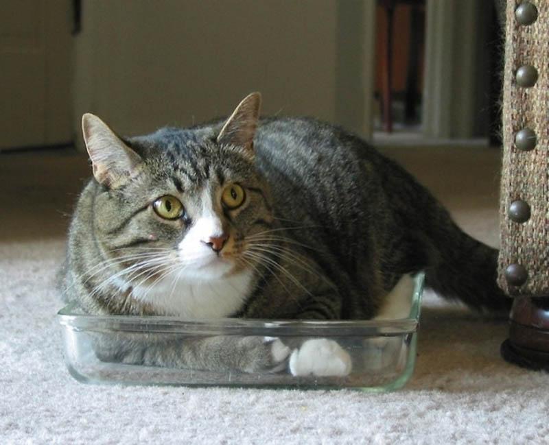 169 Идеальные места для отдыха   версия для котов