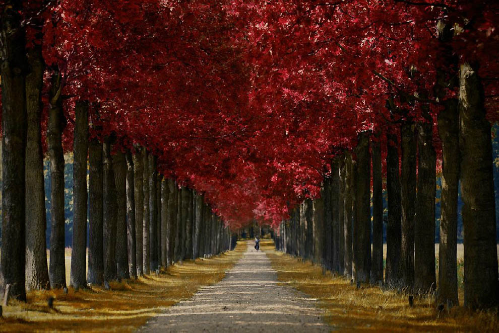 необычные картинки аллея красные деревья выборе любого