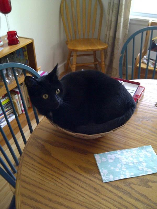 178 Идеальные места для отдыха   версия для котов