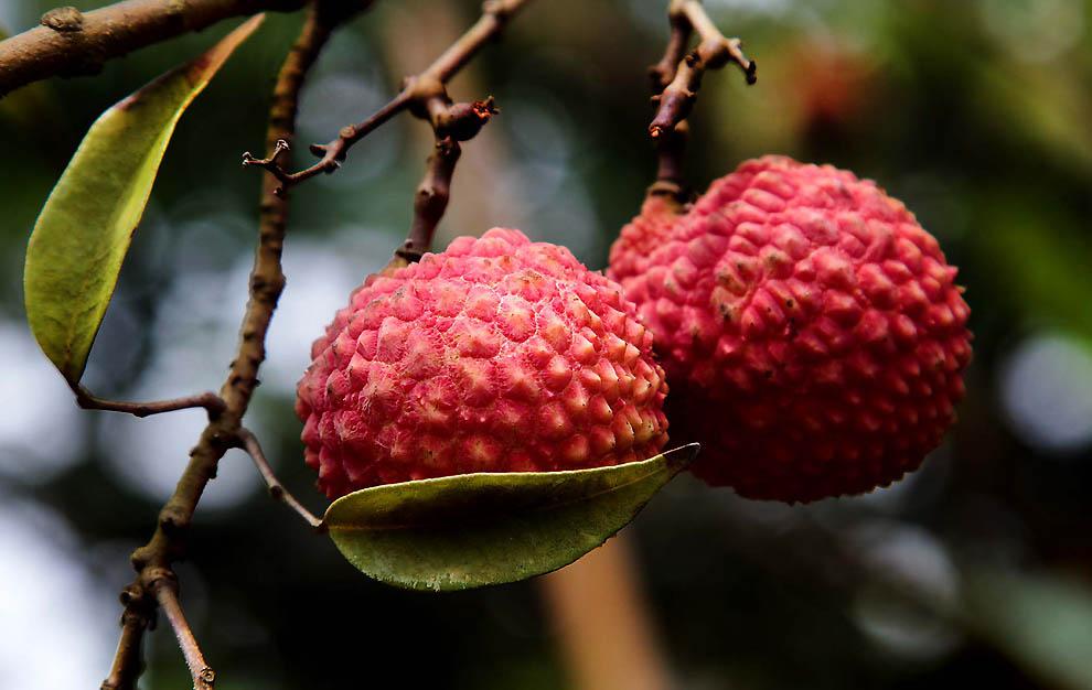 1815 Экзотические фрукты