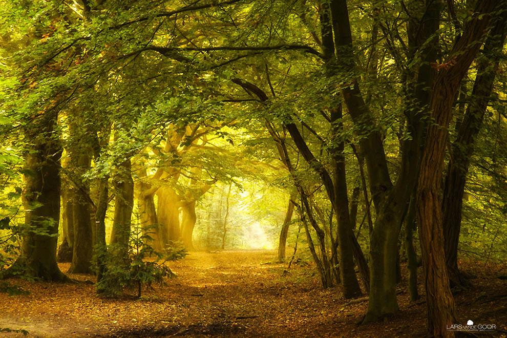 1830 Лесные пейзажи Ларса Ван де Гур