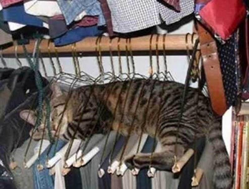 186 Идеальные места для отдыха   версия для котов