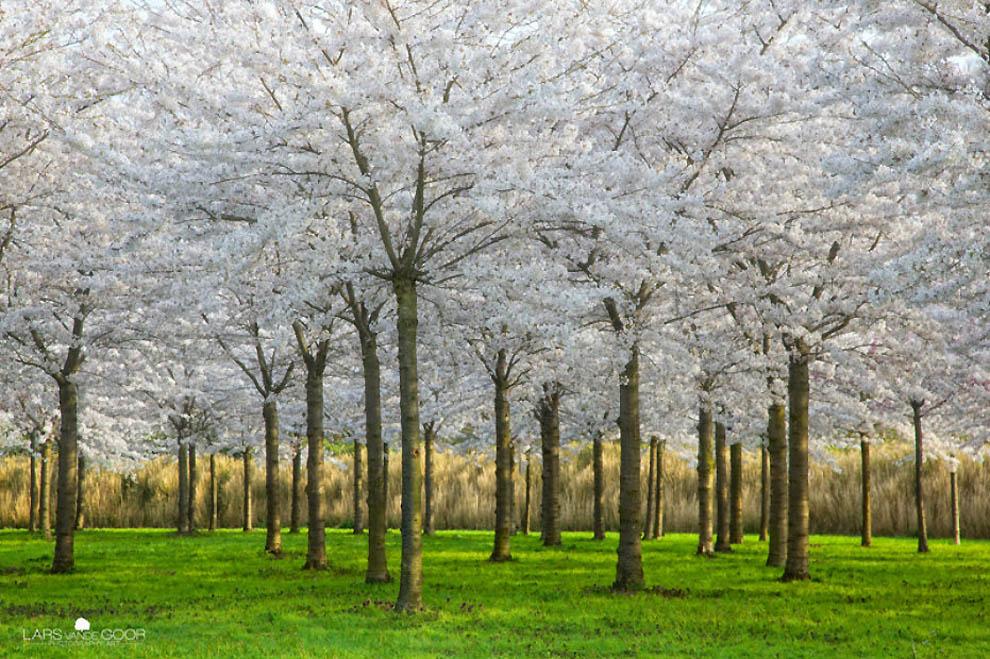 2025 Лесные пейзажи Ларса Ван де Гур