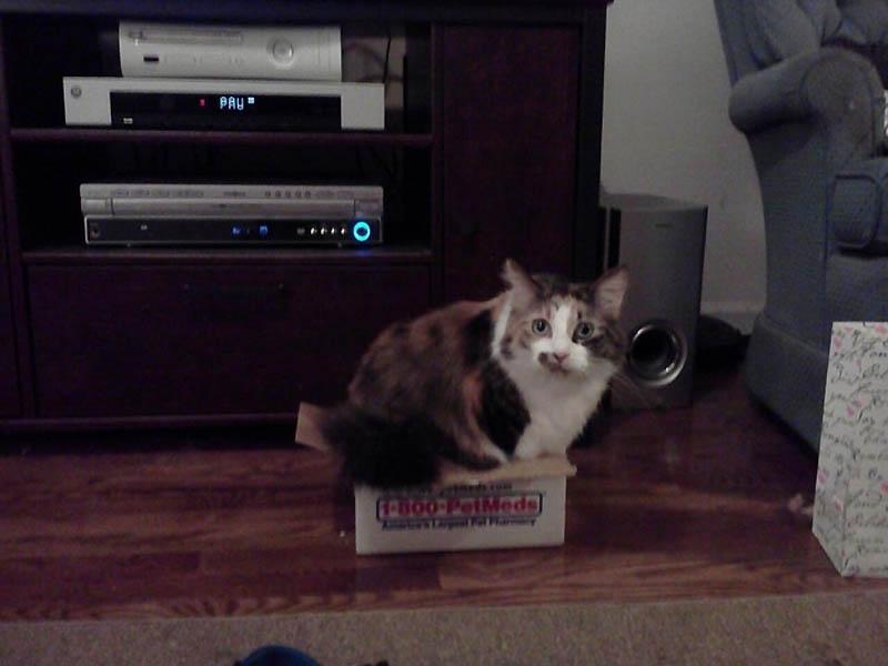 205 Идеальные места для отдыха   версия для котов