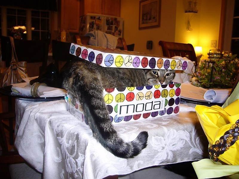 2111 Идеальные места для отдыха   версия для котов