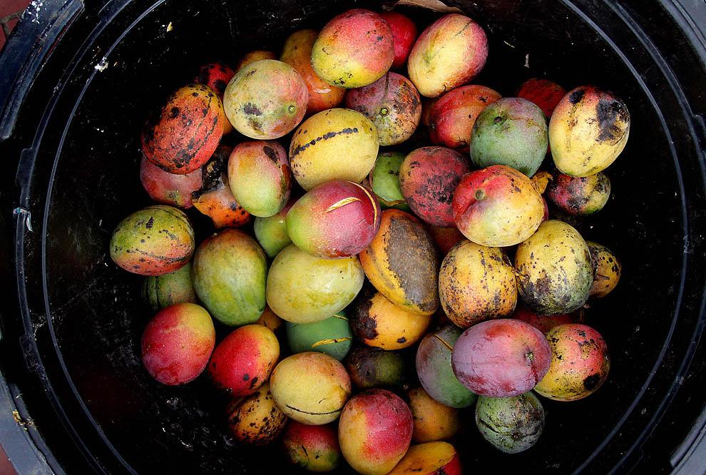 2117 Экзотические фрукты