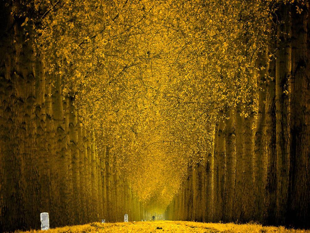 2140 Лесные пейзажи Ларса Ван де Гур