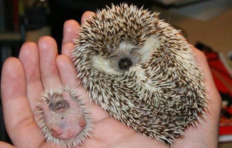 детские картинки с животными: