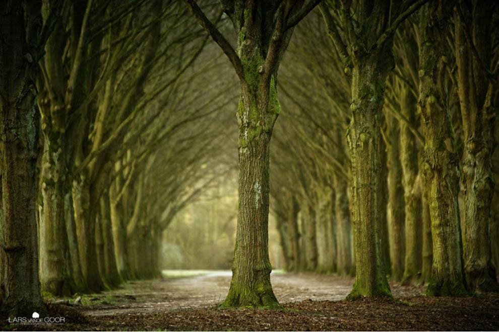 2224 Лесные пейзажи Ларса Ван де Гур