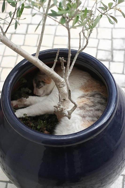 228 Идеальные места для отдыха   версия для котов