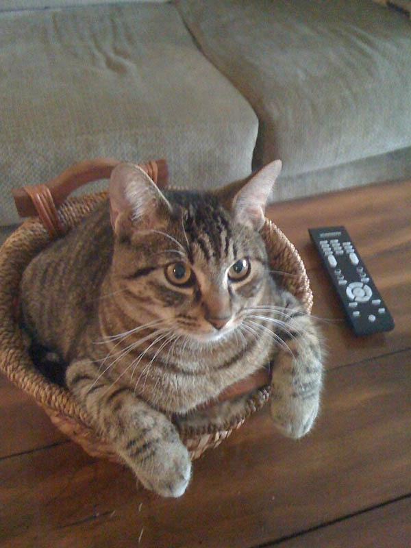 229 Идеальные места для отдыха   версия для котов