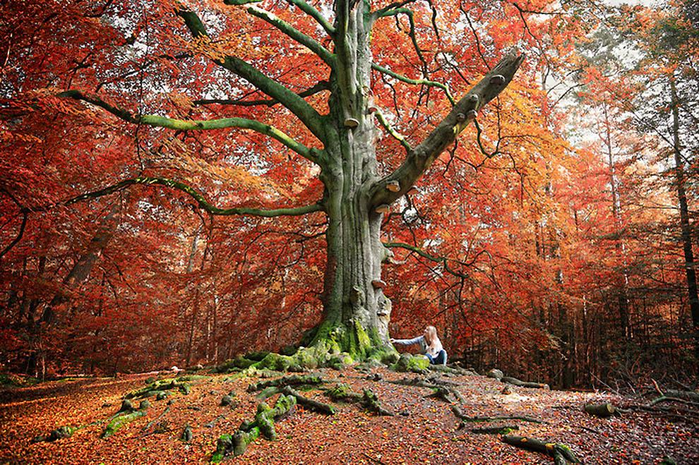 2322 Лесные пейзажи Ларса Ван де Гур