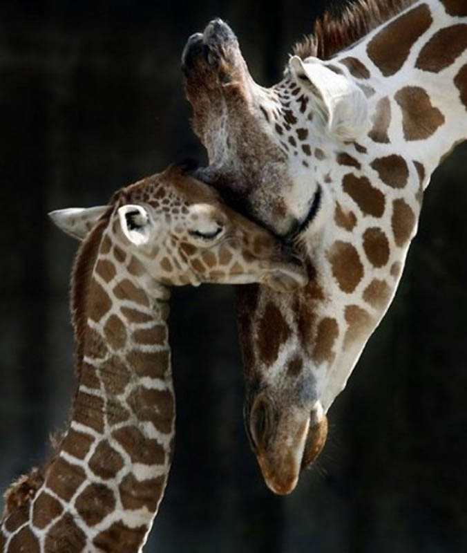 2324 Детские двойники взрослых животных