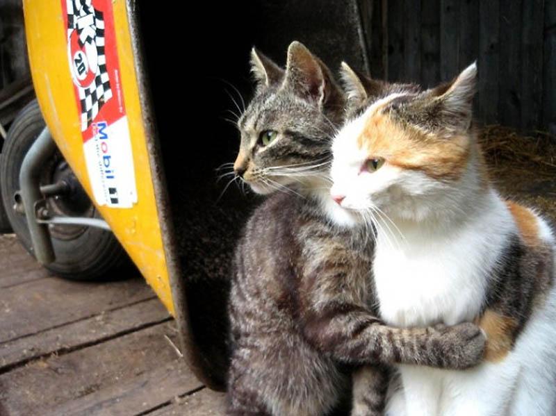 2329 Почему кошки лучше собак
