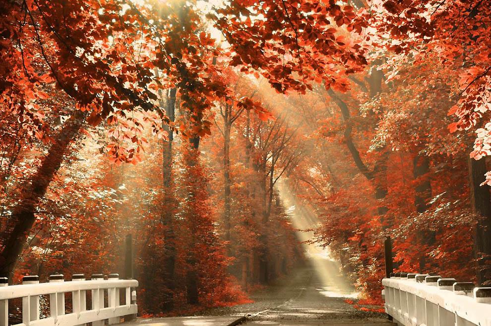 2422 Лесные пейзажи Ларса Ван де Гур