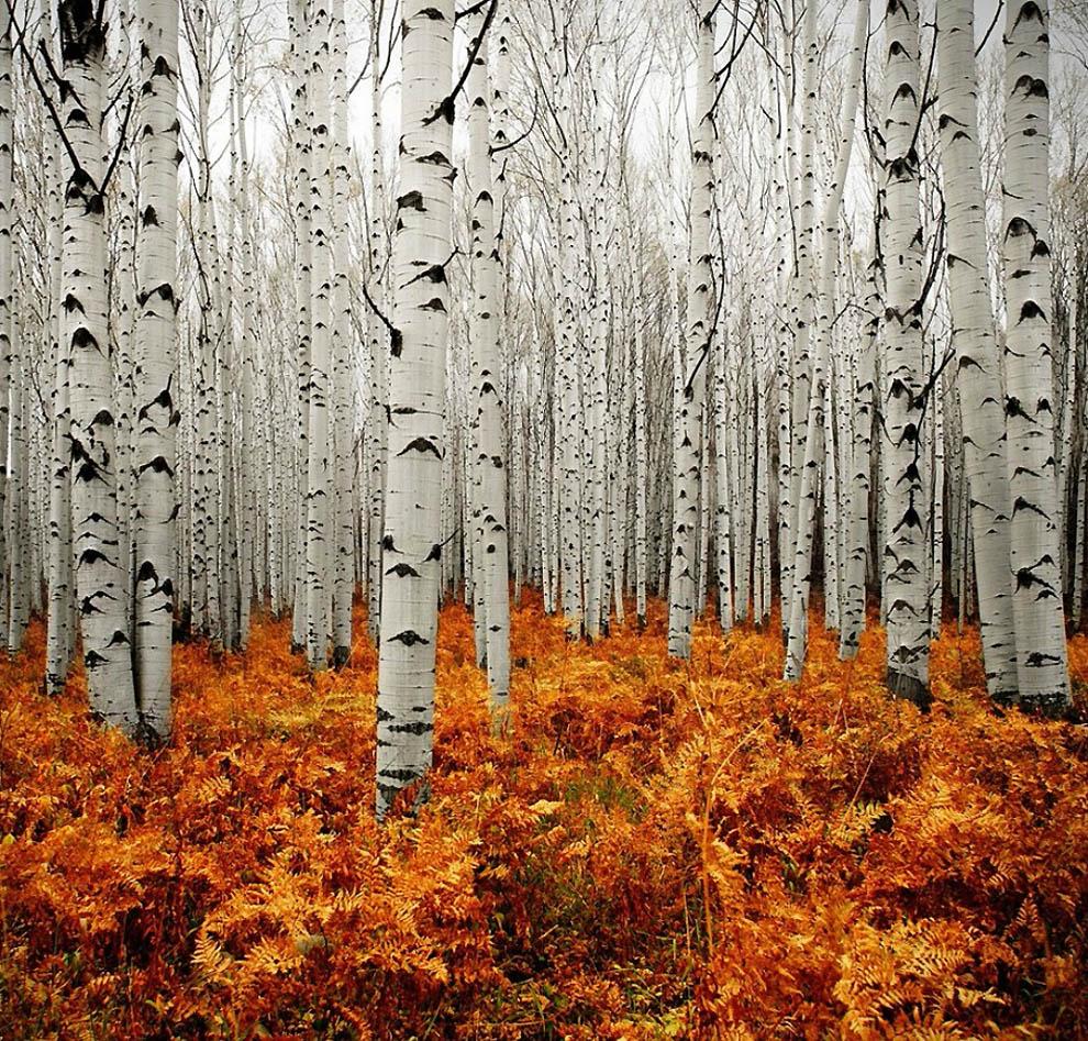 2519 Лесные пейзажи Ларса Ван де Гур
