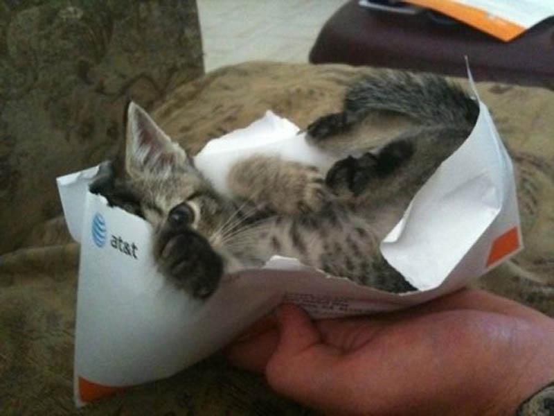 255 Идеальные места для отдыха   версия для котов