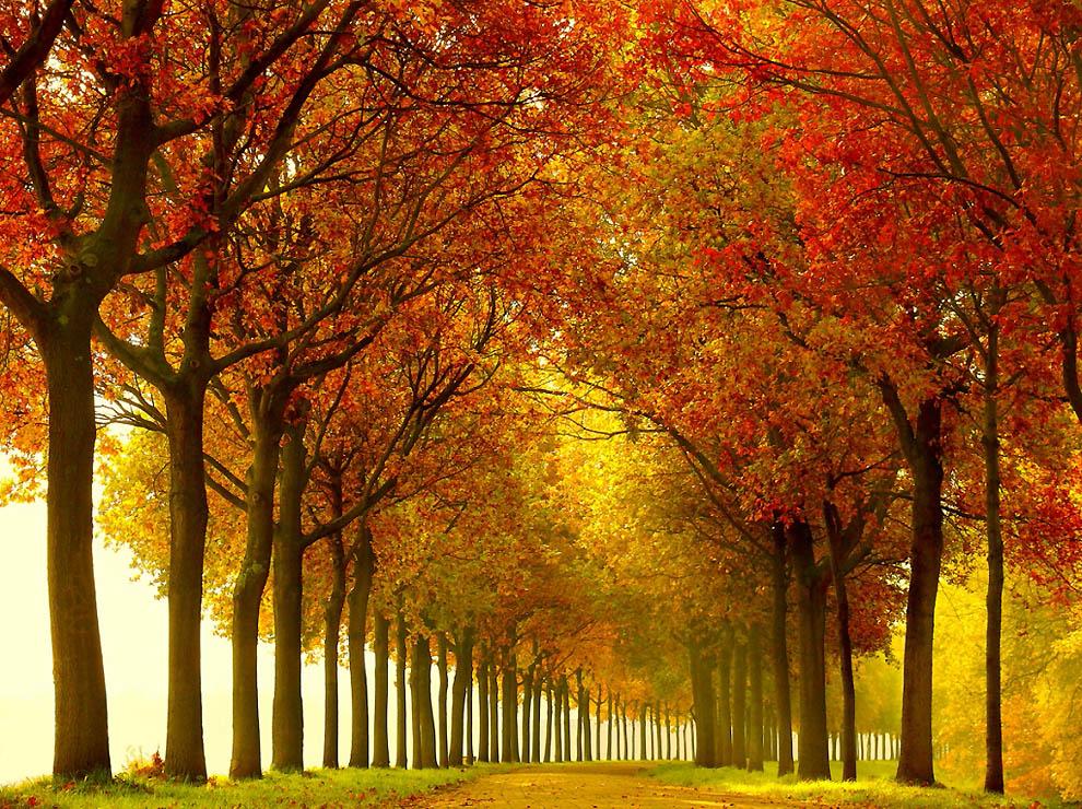 2616 Лесные пейзажи Ларса Ван де Гур