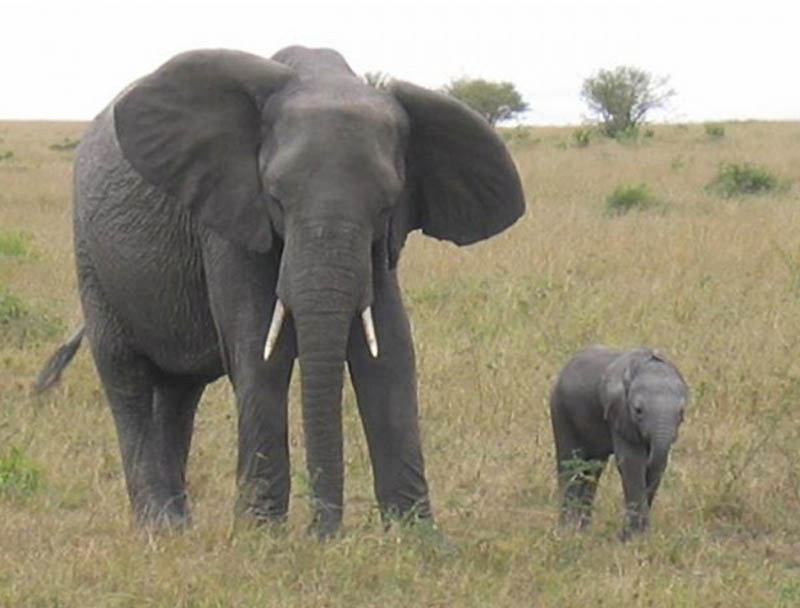 2618 Детские двойники взрослых животных