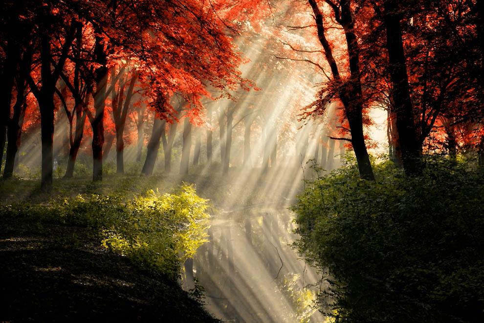 2716 Лесные пейзажи Ларса Ван де Гур