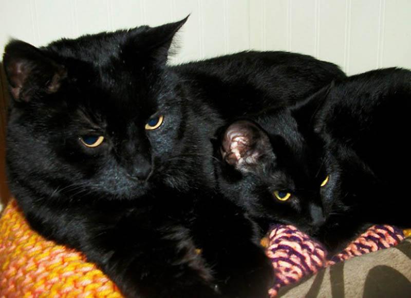 2718 Детские двойники взрослых животных