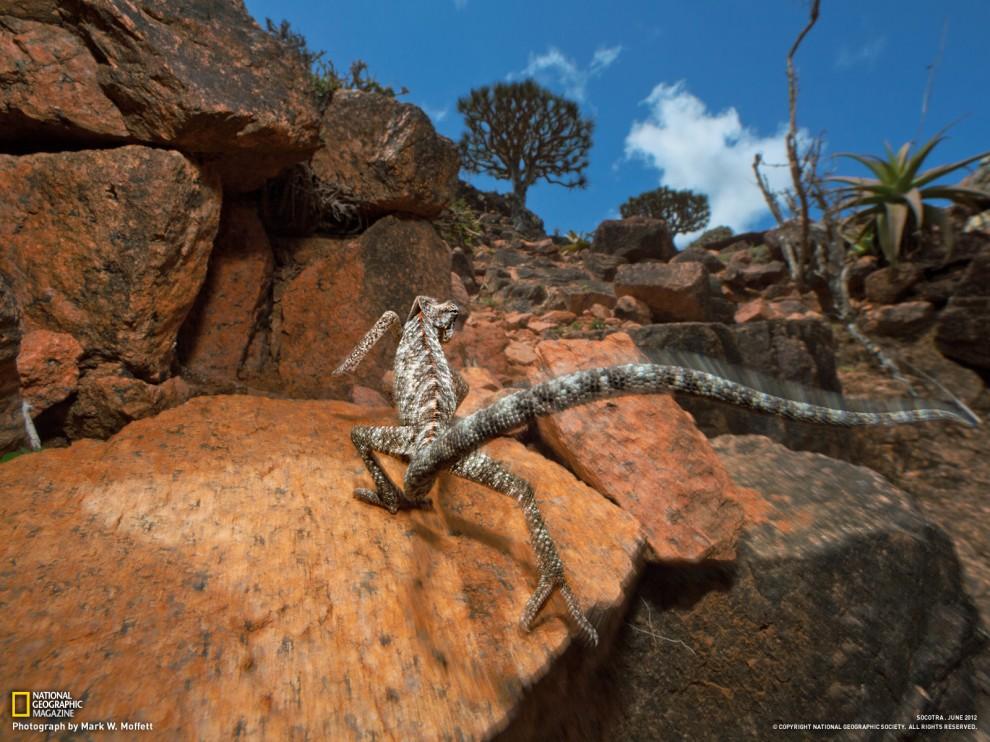 281 990x742 Обои для рабочего стола от National Geographic за июль 2012