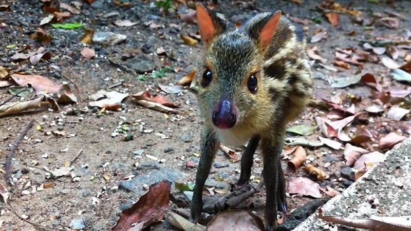 307 Умилительные экзотичные зверята малыши