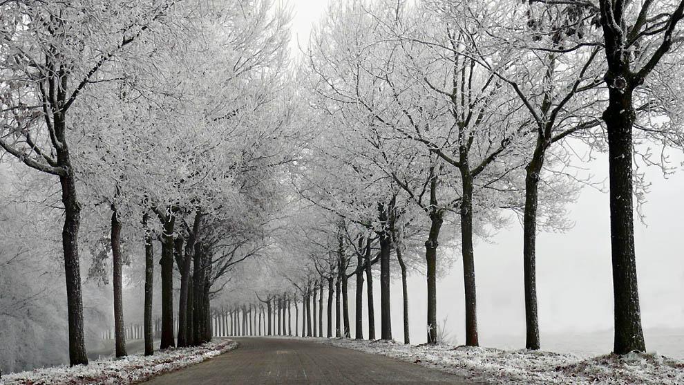 3104 Лесные пейзажи Ларса Ван де Гур