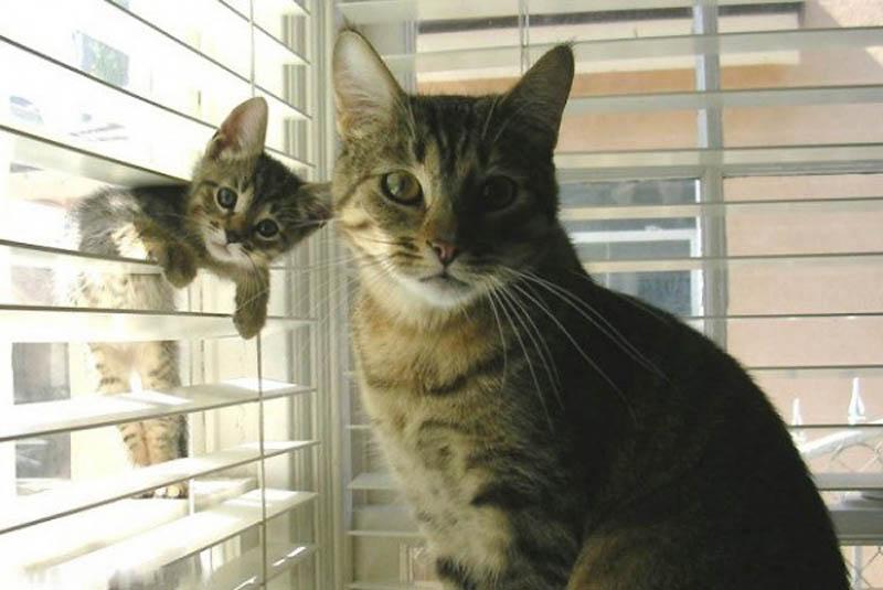 3106 Детские двойники взрослых животных