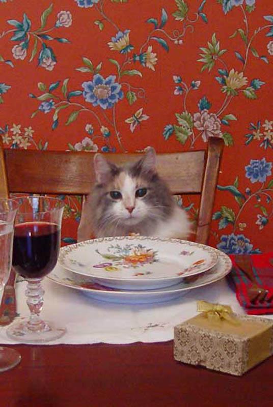 3131 Почему кошки лучше собак