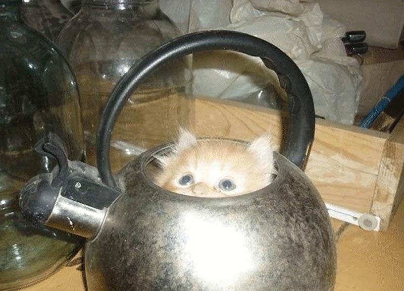 324 Идеальные места для отдыха   версия для котов
